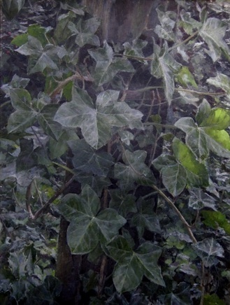 Ivy in Midwinter