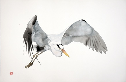 <span class=%22title%22>Great Grey Heron Flying</span>